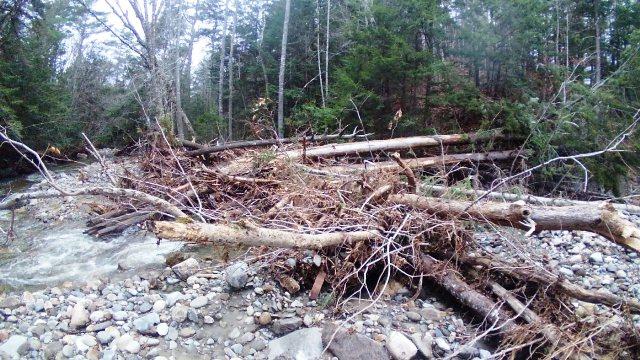 trees damming water