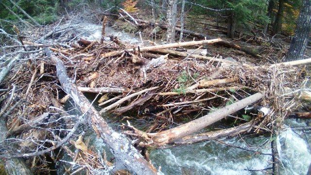 log jam of trees