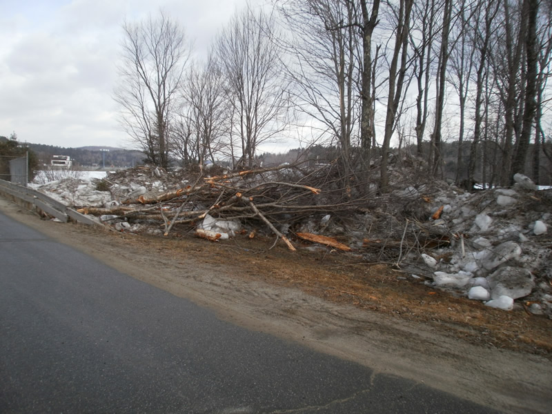 tree debris caused by flood