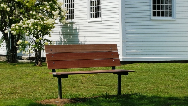 bench and flowering tree