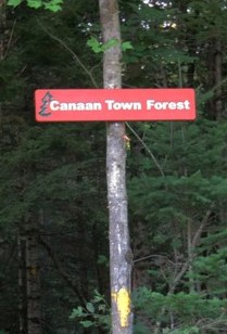 Town Forest Sign
